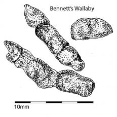 Bennetts wallaby droppings 2sq
